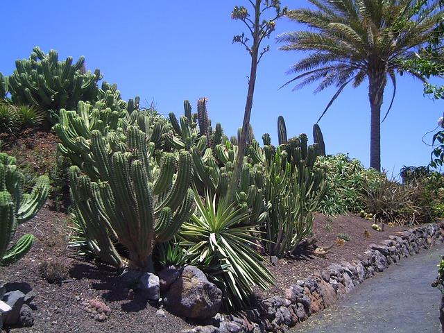 Kakteen Fuerteventura