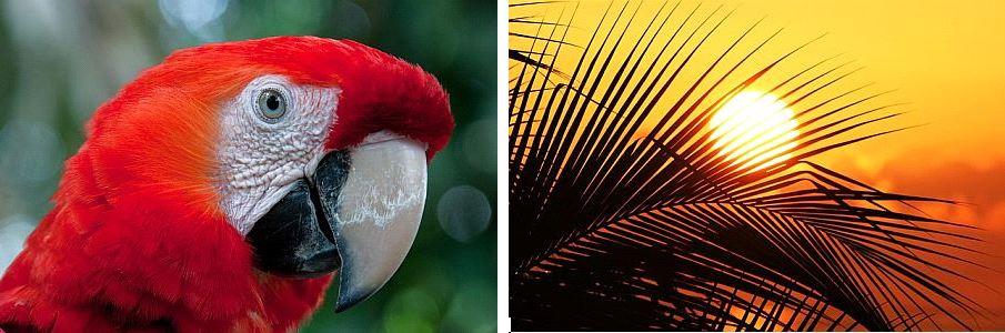 Papagie und Sonne