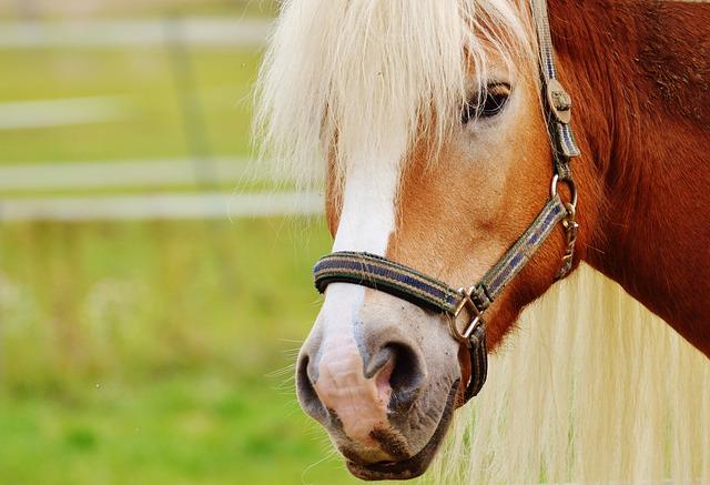 Reiterhof Pferd