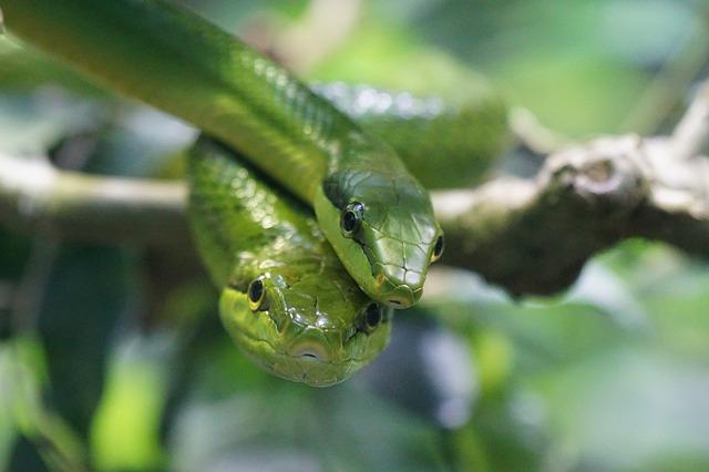 Reptilien Schlange grün Baum